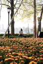 Businesswoman sitting on bench with tulips blooming in foreground at park