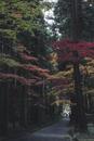 Narrow footpath amidst autumn trees at park