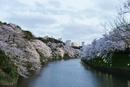 River amidst cherry blossom trees at Chidorigafuchi against sky