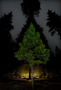 Digital composite image of trees growing in illuminated forest