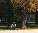 木陰で読書をする人