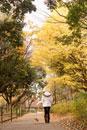 秋の公園を散歩する女性と犬