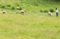 草原の中にいる女性とひつじの群れ