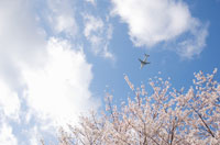 桜と空と飛行機