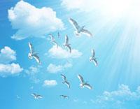青空を飛ぶ鳥の群衆 07800008111| 写真素材・ストックフォト・画像・イラスト素材|アマナイメージズ