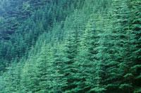 森林 07800014031| 写真素材・ストックフォト・画像・イラスト素材|アマナイメージズ