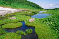 鳥海山の湿原