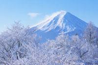樹氷と富士山