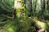 白駒池の樹木
