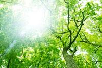 新緑の森林と木漏れ日