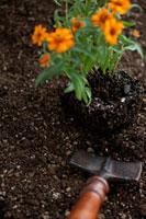 シャベルと花の苗
