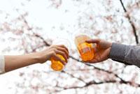 ビールで乾杯する手とサクラ