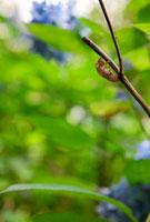 枝に止まっているセミの抜け殻