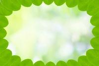 葉っぱのフレーム
