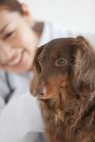 犬と笑顔の獣医