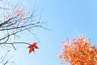 紅葉と枯れ木