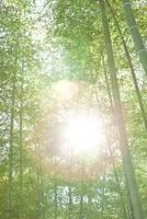 竹林と日差し