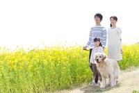 ナノハナ畑を歩く3人家族と犬