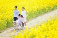 ナノハナ畑の中を歩く4人家族と犬