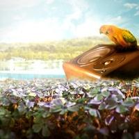 花畑と鳥2羽のイメージ