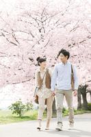 桜と手をつなぐカップル