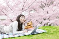 桜とノートパソコンを操作する女性