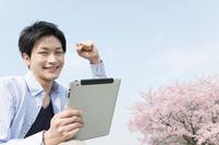 桜とタプレットPCを持つ男性