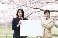 桜の下のビジネスウーマンと女子高生
