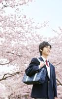 桜の木の下に立つ男子学生