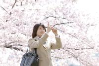 スマートフォンで桜を撮る女子高生