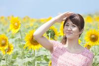 ひまわり畑で遠くを眺めている女性