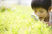 虫眼鏡で花を見ている男の子