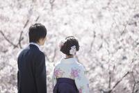 桜と後姿の大学生2人