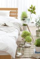 植物がある寝室イメージ