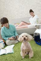 お座りをする犬 07800054345| 写真素材・ストックフォト・画像・イラスト素材|アマナイメージズ