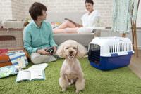 お座りをする犬 07800054346| 写真素材・ストックフォト・画像・イラスト素材|アマナイメージズ
