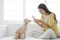 スマートフォンで犬の写真を撮る女性 07800054386| 写真素材・ストックフォト・画像・イラスト素材|アマナイメージズ