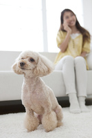お座りをする犬