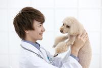 犬を抱き上げる獣医 07800054646| 写真素材・ストックフォト・画像・イラスト素材|アマナイメージズ