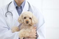 獣医に抱えられる犬 07800054649| 写真素材・ストックフォト・画像・イラスト素材|アマナイメージズ