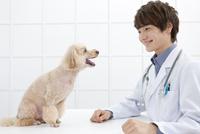犬と向かい合う獣医 07800054650| 写真素材・ストックフォト・画像・イラスト素材|アマナイメージズ