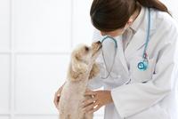 犬を診る獣医 07800054657| 写真素材・ストックフォト・画像・イラスト素材|アマナイメージズ