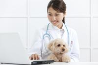 犬とパソコンに向かう獣医 07800054661| 写真素材・ストックフォト・画像・イラスト素材|アマナイメージズ