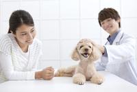 犬と飼い主と獣医 07800054666| 写真素材・ストックフォト・画像・イラスト素材|アマナイメージズ