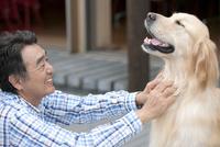 犬と遊ぶ中年男性 07800055648| 写真素材・ストックフォト・画像・イラスト素材|アマナイメージズ