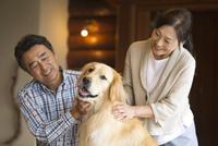 犬をあやす中高年夫婦 07800056075| 写真素材・ストックフォト・画像・イラスト素材|アマナイメージズ