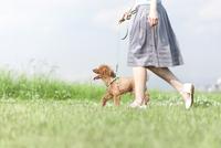 散歩する犬と女性 07900003416| 写真素材・ストックフォト・画像・イラスト素材|アマナイメージズ