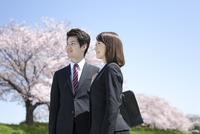 桜並木とビジネスマン2人