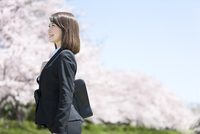 桜並木とビジネスウーマン