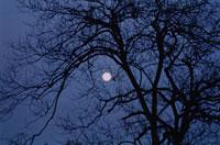 月 夜 木